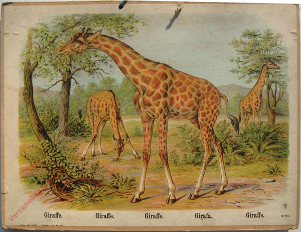 765 - Giraffe, Firaffe, Giraffe, Girafa, Giraffe
